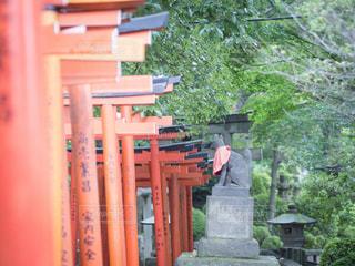 乙女稲荷神社の写真・画像素材[2321295]