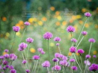 秋の花畑の写真・画像素材[2499009]