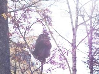 冬の始まりの写真・画像素材[2713969]