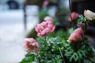 花のクローズアップの写真・画像素材[4061472]