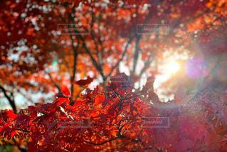 木漏れ日の写真・画像素材[1854512]