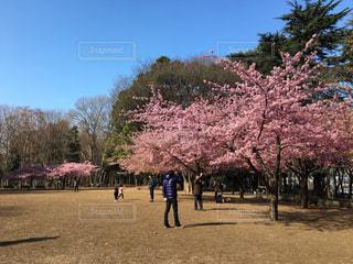 桜 - No.363334
