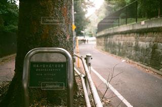 木と坂道の写真・画像素材[1536627]