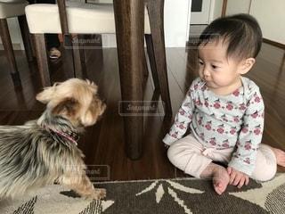 犬を対峙している小さな女の子の写真・画像素材[1829579]