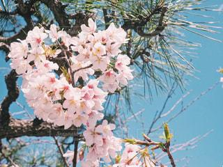 植物にピンクの花の写真・画像素材[1832189]