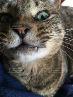睨む猫の写真・画像素材[1856162]