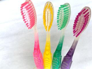 歯ブラシの写真・画像素材[1859052]