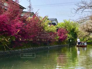 柳川の川下りの写真・画像素材[2003823]