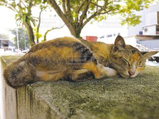 お昼寝する野良猫の写真・画像素材[2241995]