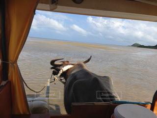 水牛車の中からの風景の写真・画像素材[1859681]