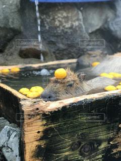 いい湯で極楽の写真・画像素材[1872723]