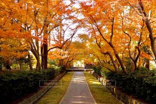 紅葉した木々に包まれたお寺の参道の写真・画像素材[2805009]