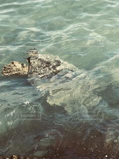 水の動物の写真・画像素材[1860963]