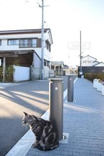 道路の脇に座っている猫の写真・画像素材[2764567]