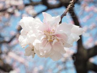 近くの花のアップの写真・画像素材[1863665]