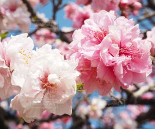 近くの花のアップの写真・画像素材[1863666]