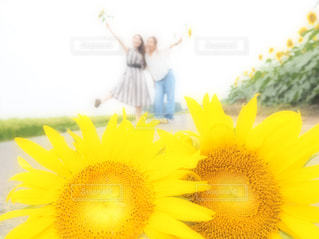 黄色の花の写真・画像素材[1863711]