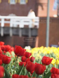 テーブルの上の花の花瓶の写真・画像素材[1864846]