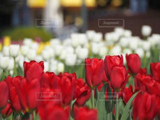 テーブルの上の花の花瓶の写真・画像素材[1864847]