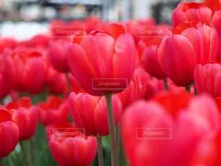 近くの花のアップの写真・画像素材[1864850]