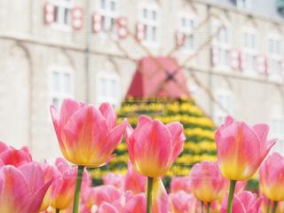 ピンクの花で一杯の花瓶の写真・画像素材[1864852]