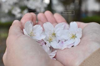花を持つ手のクローズアップの写真・画像素材[3205641]