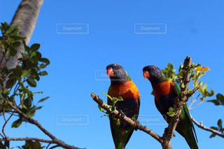 鳥の写真・画像素材[2147184]