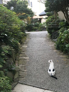 猫の写真・画像素材[2147250]