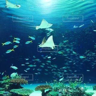 海の写真・画像素材[13941]