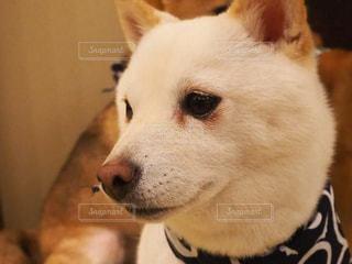 近くに犬のアップの写真・画像素材[1870363]