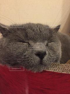 猫の写真・画像素材[136147]