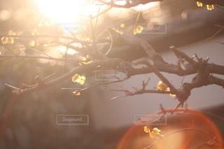 逆光と花の写真・画像素材[1868903]