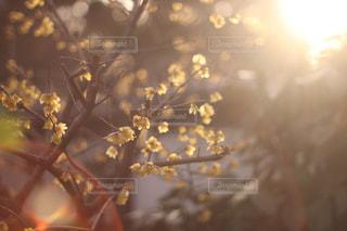 逆光の花の写真・画像素材[1868909]