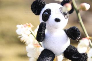 パンダのぬいぐるみの写真・画像素材[1870681]