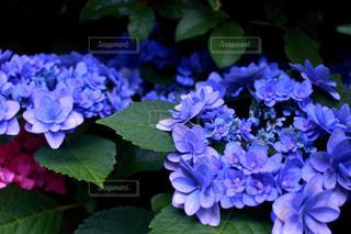 近くの花のアップの写真・画像素材[1868552]