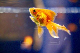 魚のぼやけた画像の写真・画像素材[1876093]
