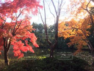 秋の国立植物園の写真・画像素材[1872031]