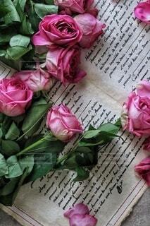 バラの花の写真・画像素材[4203365]