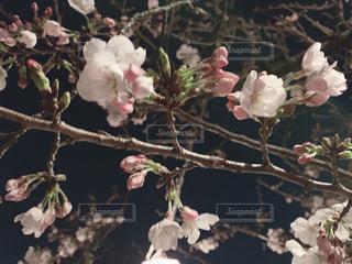 近くの花のアップの写真・画像素材[1870044]