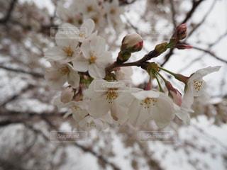近くの花のアップの写真・画像素材[1877147]