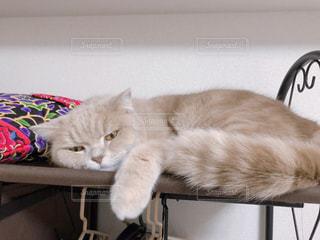 テーブルの上で眠っている猫の写真・画像素材[1871653]
