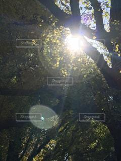 近くに池のアップの写真・画像素材[866970]