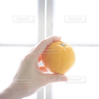 じゃばらというフルーツの写真・画像素材[1021651]
