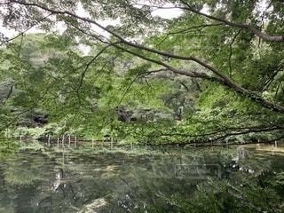 初夏の井の頭公園の写真・画像素材[2274116]