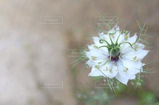 花のクローズアップの写真・画像素材[3256196]