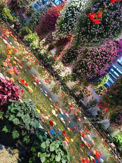 庭園と色とりどりの花の写真・画像素材[1872660]