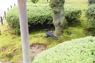 草の中に立っている鳥 - No.964641