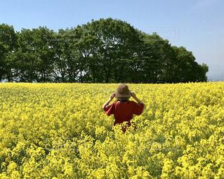 菜の花と女性の写真・画像素材[2160778]