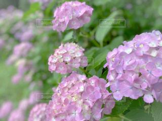 花のクローズアップの写真・画像素材[3321686]