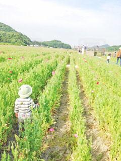 ポピー畑とカエル帽子🐸の写真・画像素材[2013577]